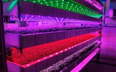 LED Lighting Horticulture Market Size, Growth Opportunities, Current Trends, Forecast by 2026