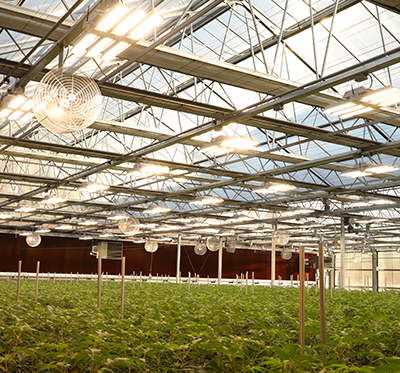 proving grounds greenhouse